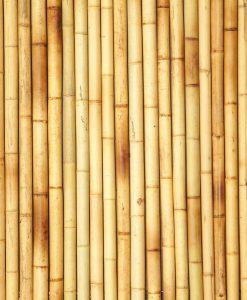 Bamboe stokken kopen
