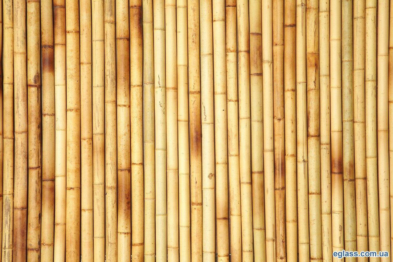 Bamboestokken kopen karwei