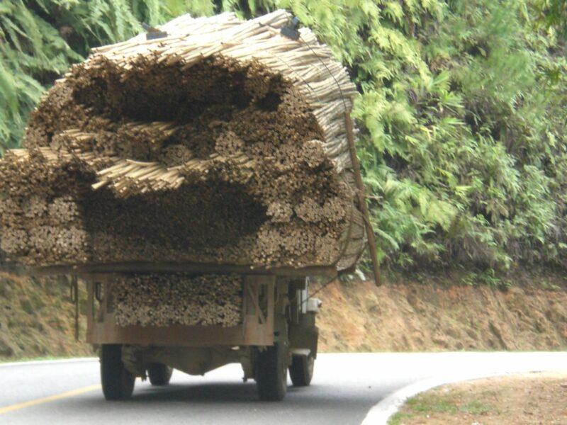 Onze bamboestokken en bamboepalen