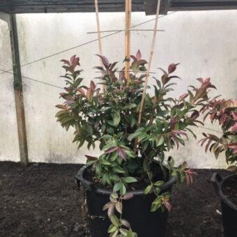 Bamboestokken ter ondersteuning van planten