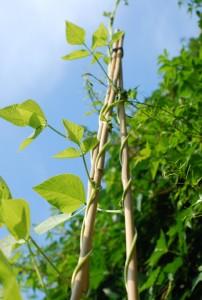 60 cm plant ondersteuning